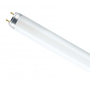 Лампа люминесцентная T8 - OSRAM-СМ L36W 840 PLUS ECO G13 d26x1200 холодный белый 4000K Смоленск - 4008321581419