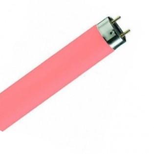 Лампа люминесцентная Colored (красная) 58W/60 3800lm T8 G13 (4050300024271) OSRAM